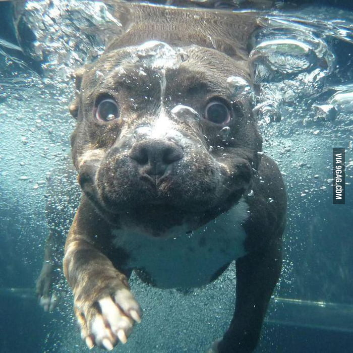 My friend took a pic of her dog underwater