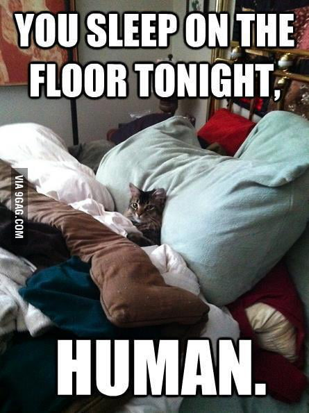 Ok Master Cat