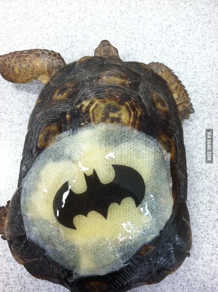 Bat Turtle!