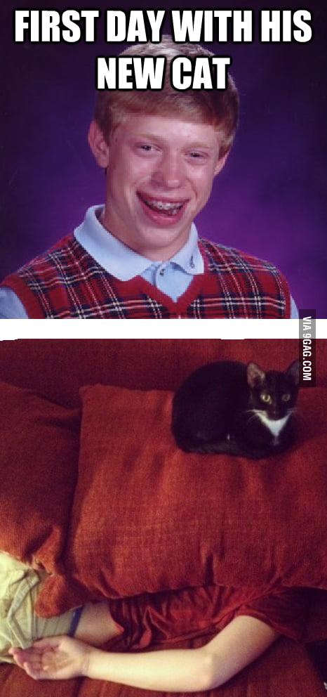 Brian gets a cat