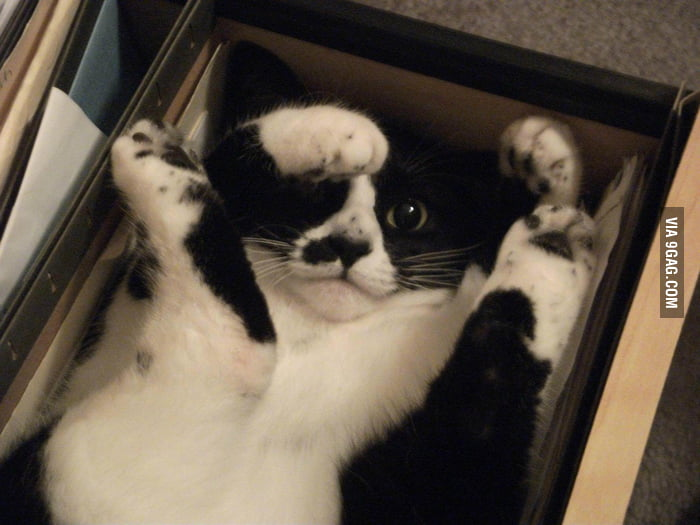 Kitty fell into the filing cabinet.