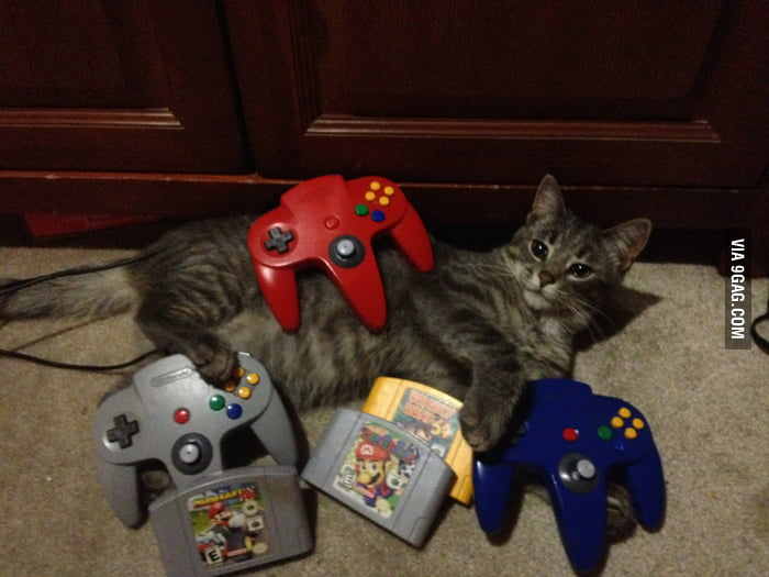 Yes I'm a cat. Yes I play video games.