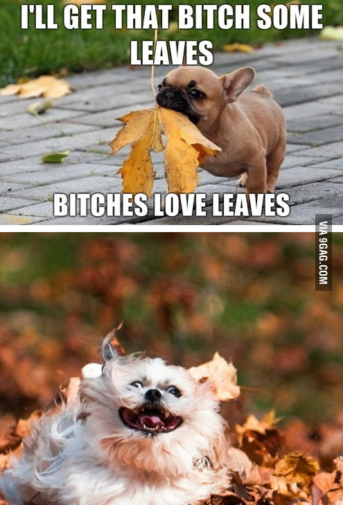 I'll get that b*tch some leaves.