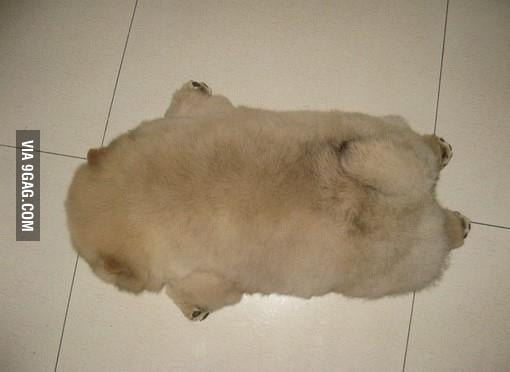 My friend's dog, AKA their rug