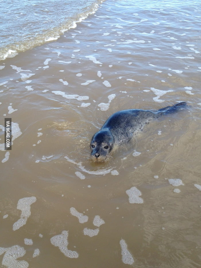 Found this cutie on the beach