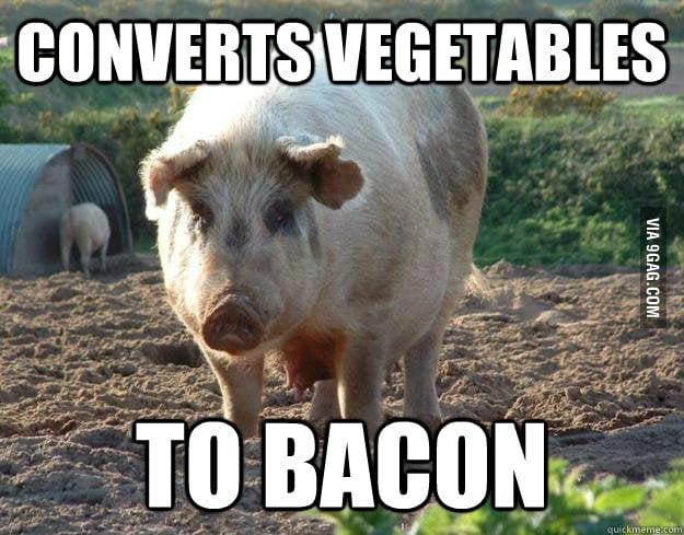 Good Guy Pig