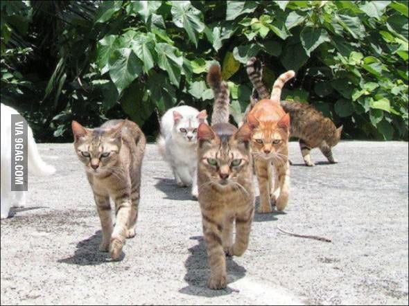 The Cat Gang have rested and ready to continue their journey