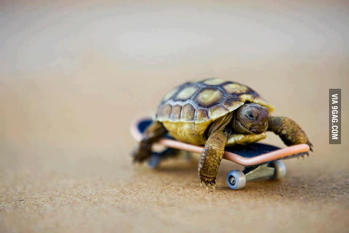 Just a turtle on a skateboard