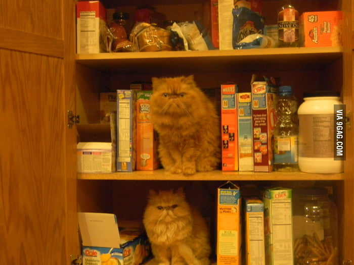 What happens when you leave the pantry door open