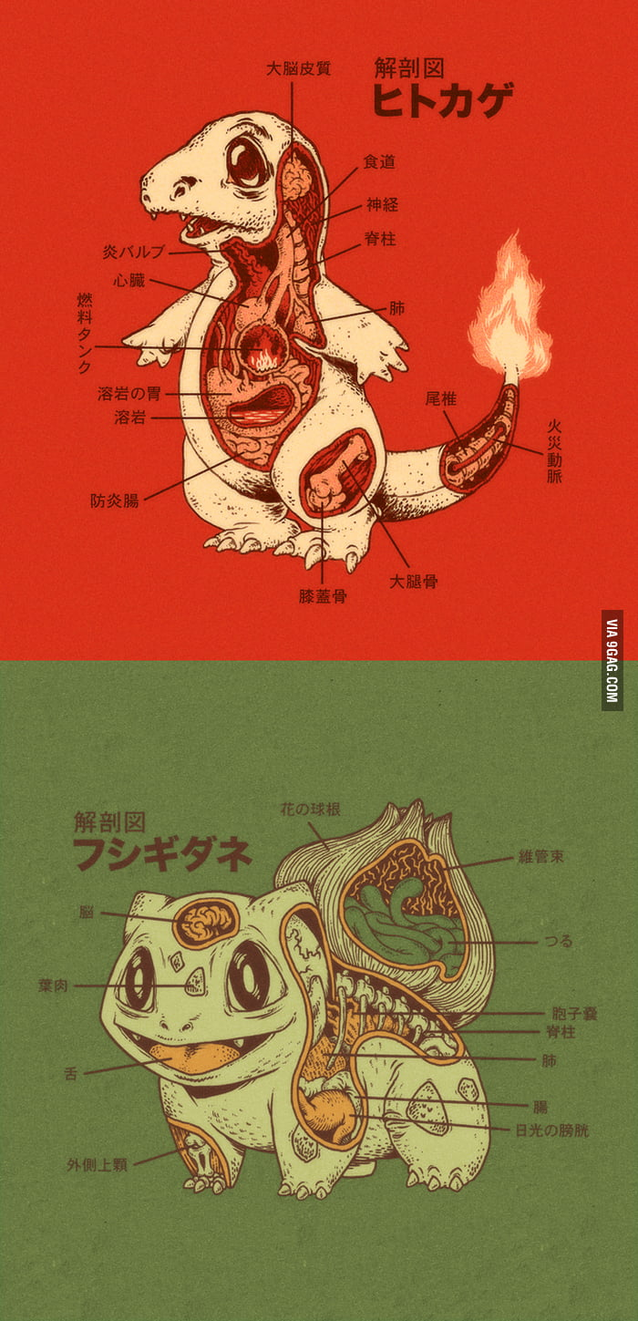 Charmander and Bulbasaur Anatomy