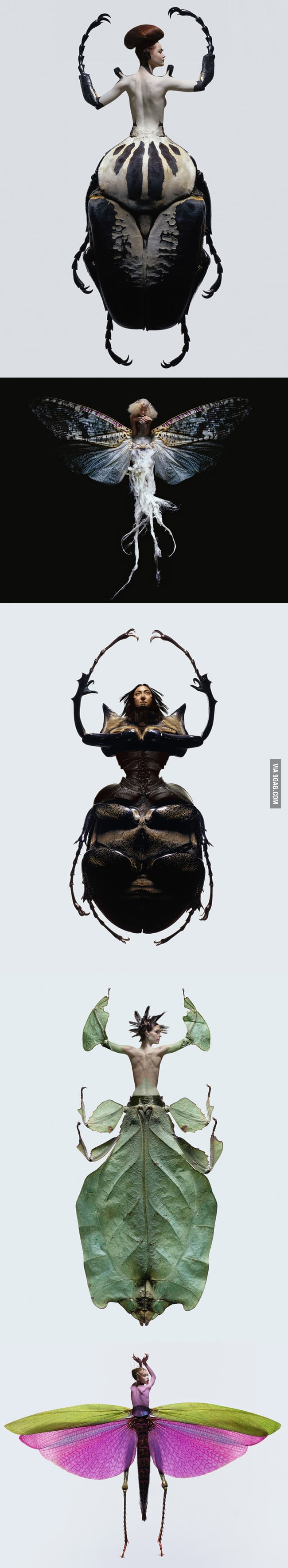 Insectes x Women