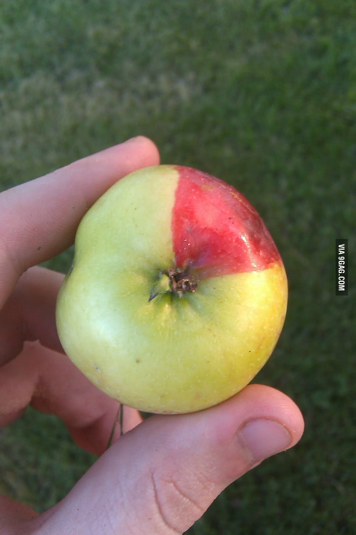 This apple was 75% done loading
