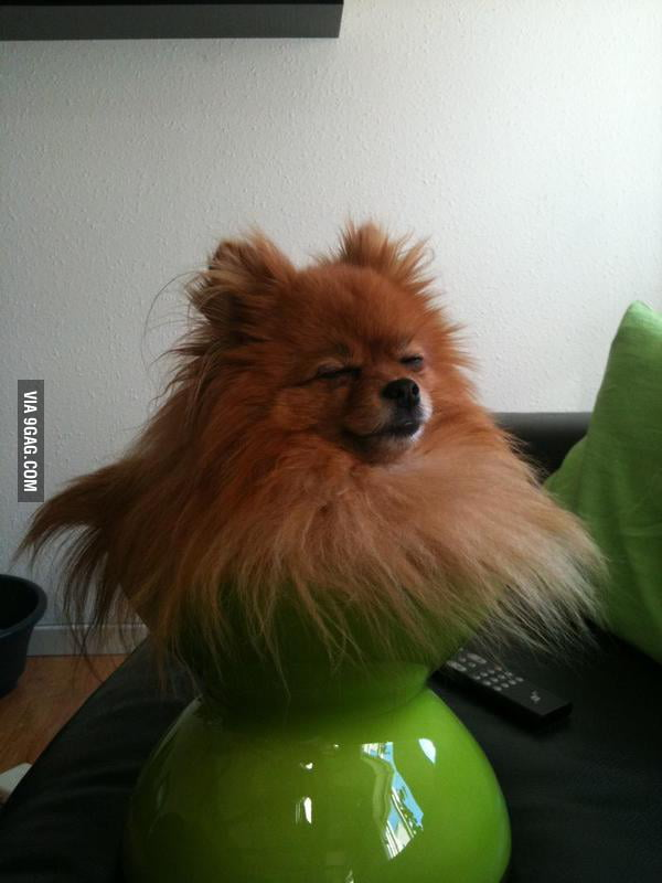If it fits it sits, doggystyle