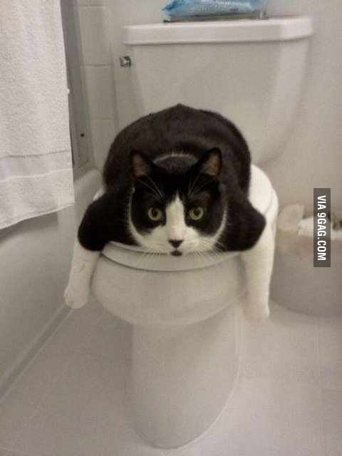 Toilet is occupied.