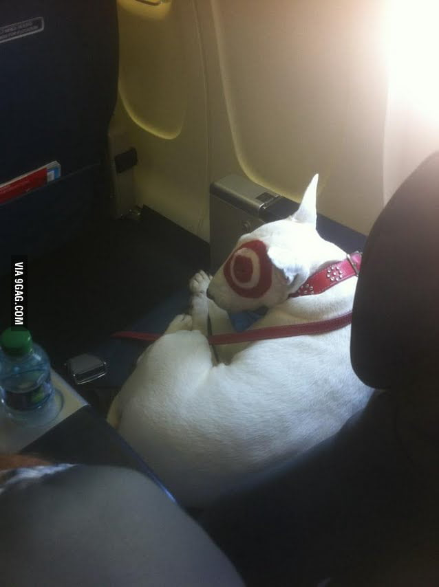 Saw this dog on my flight, first class.