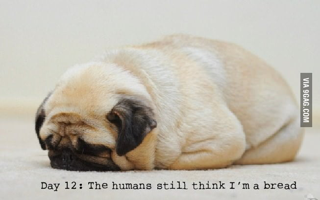 Day 12: The humans still think I'm a bread.