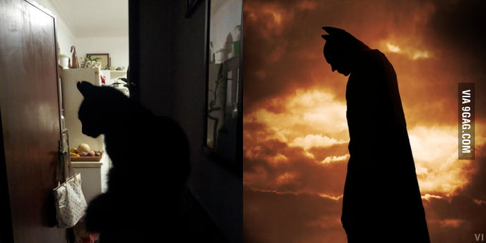 My cat vs Batman, who wins?