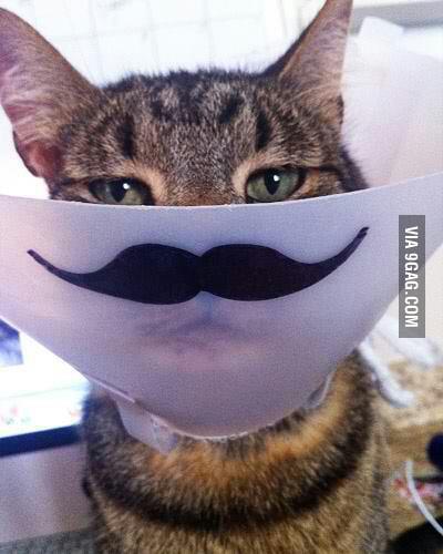 A classy cat