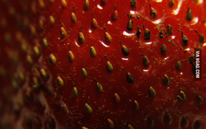 Strawberries are made up of many pears