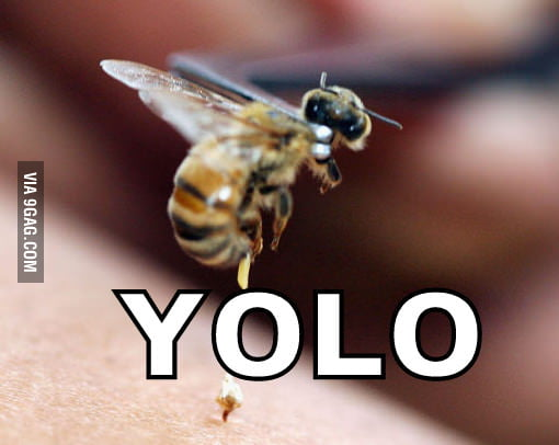 The true meaning of YOLO