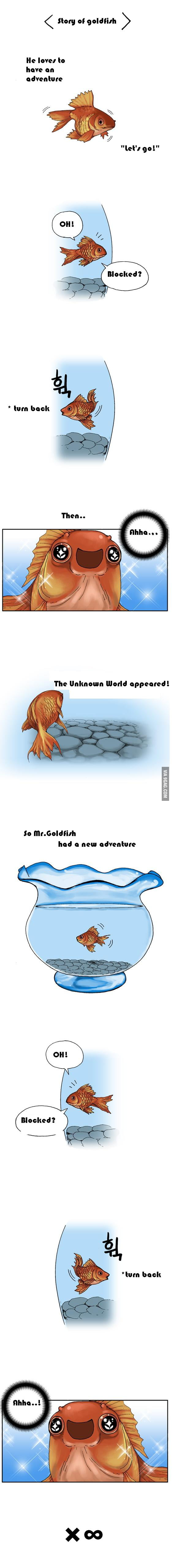 Mr. Goldfish is always happy