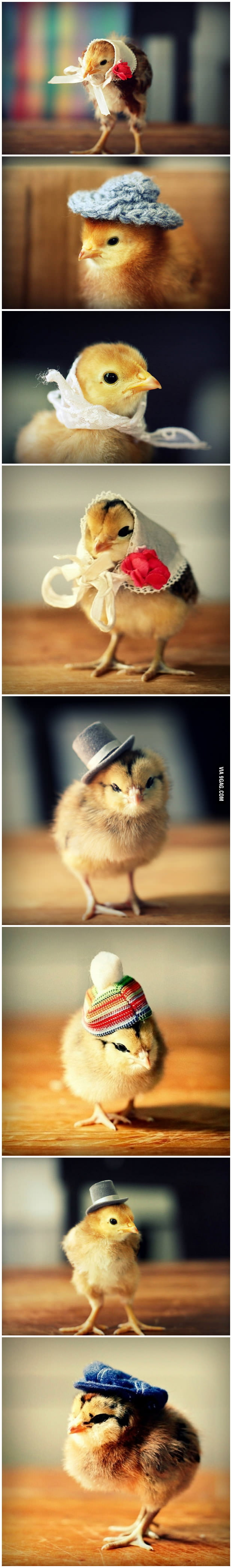 Naked chicks in hats