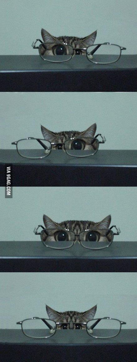 Kitten and Glasses