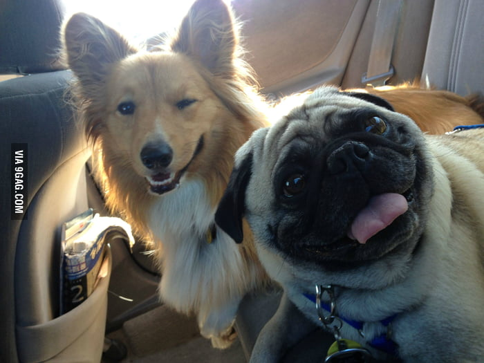 Ridiculously Photogenic Pug meets Ridiculously Photogenic Co