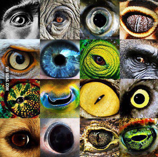 Eyes of nature