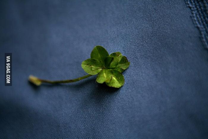 7-leaf clover!