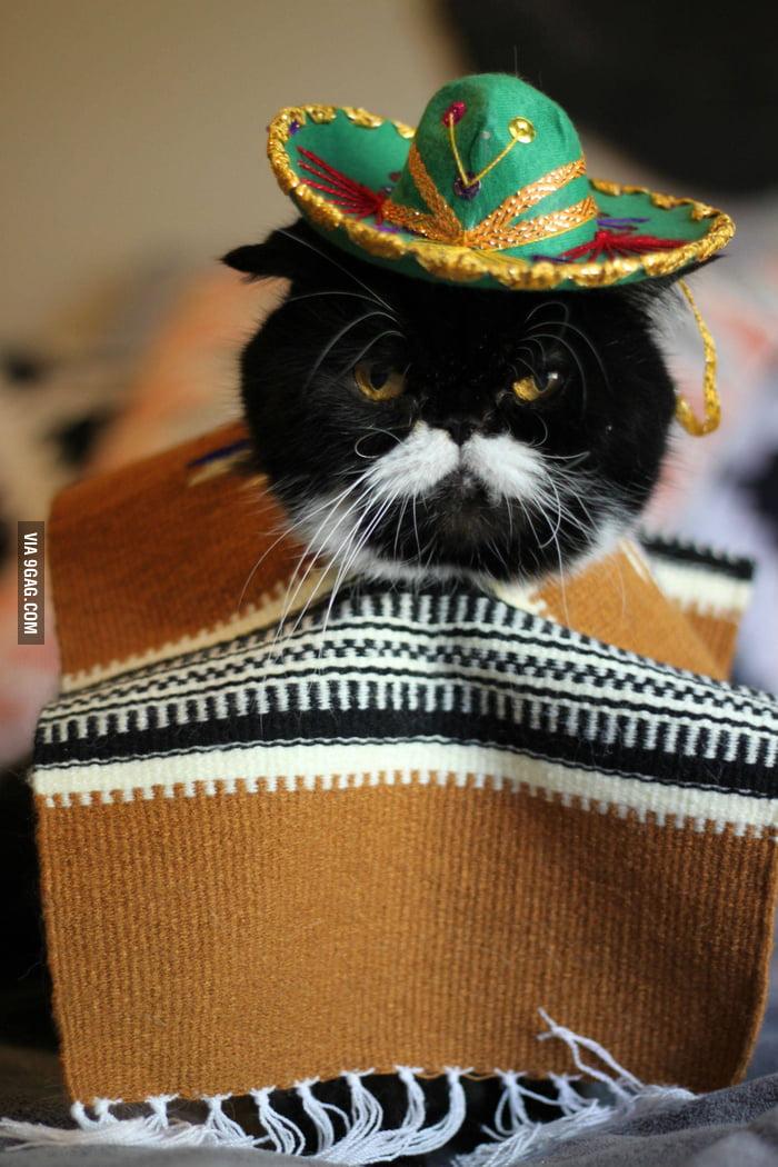 Hola, I'm a Mexican cat!