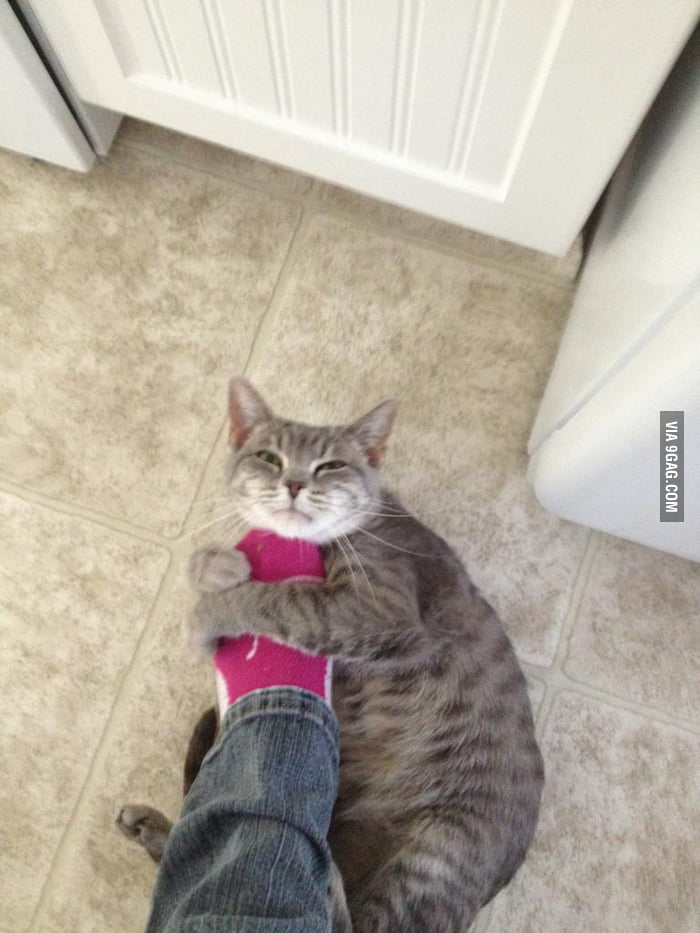Overly Attached Kitten