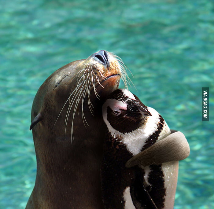 Sea Lion and Penguin are best buddies!