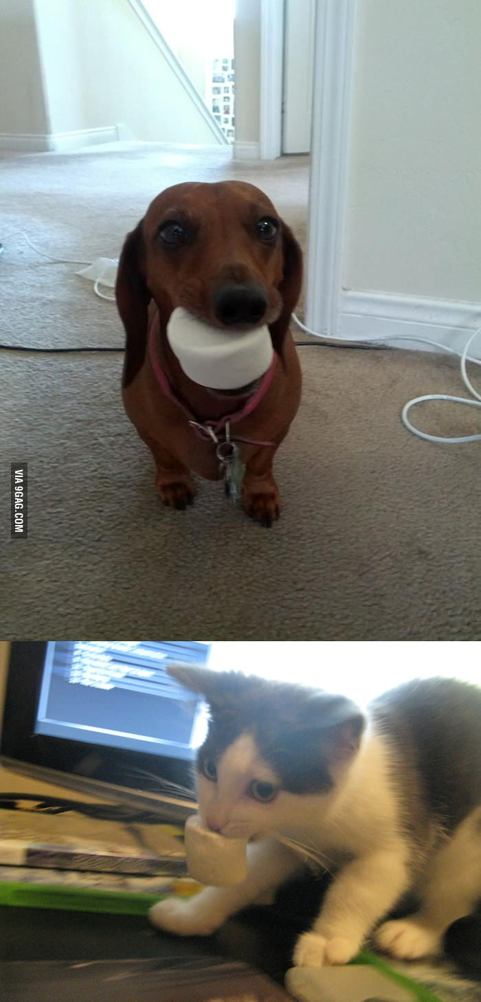 Dog brings you marshmallow while cat steals it from you.