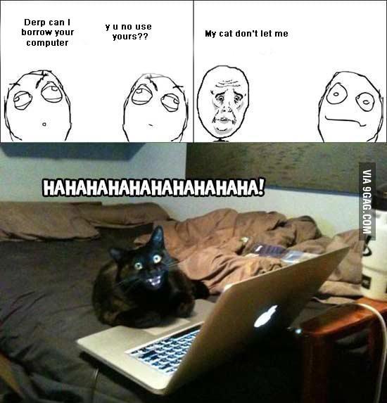 I hate my cat