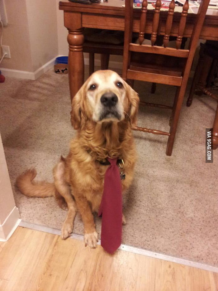 Can I go to work with you?