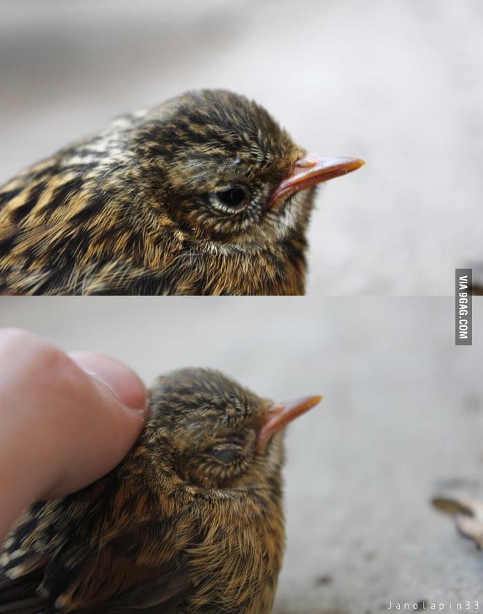 Petting a wild bird!
