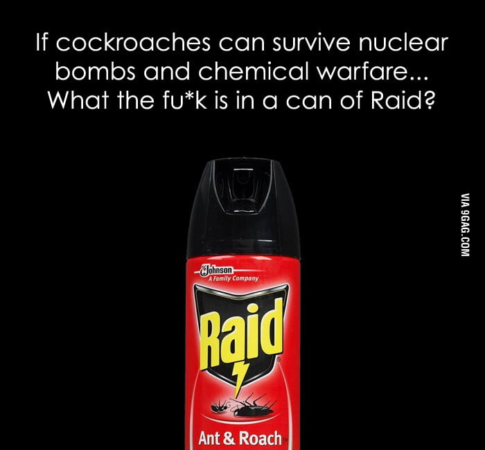 What the f**k is in a can of Raid?