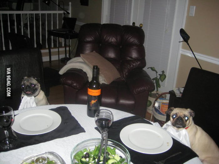 When I leave the dogs at my parents place