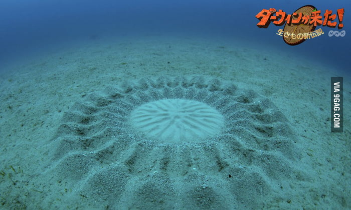 This is made by a tiny fish to attract a mate.
