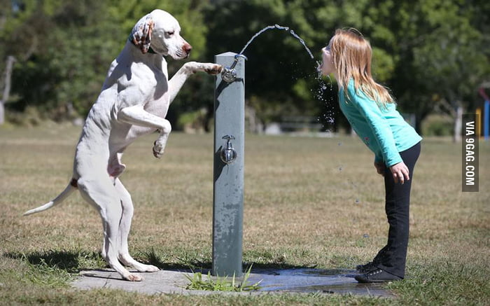 Smart dog giving master girl a drink from a water fountain.