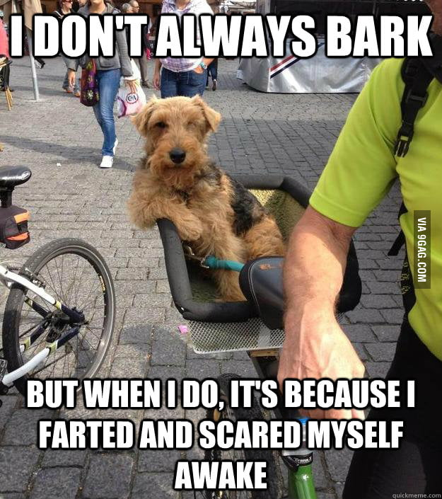 The Most Interesting Dog in the World on Barking