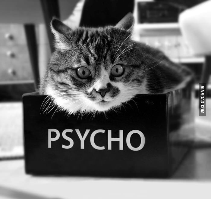 My Cat: Psycho