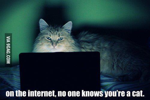 Internet cat?!