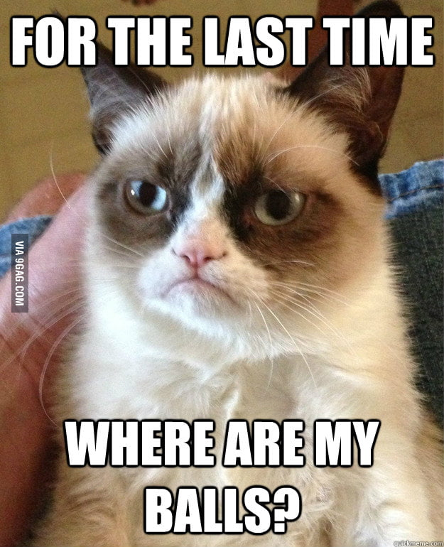 Grumpy cat comes back from the vet