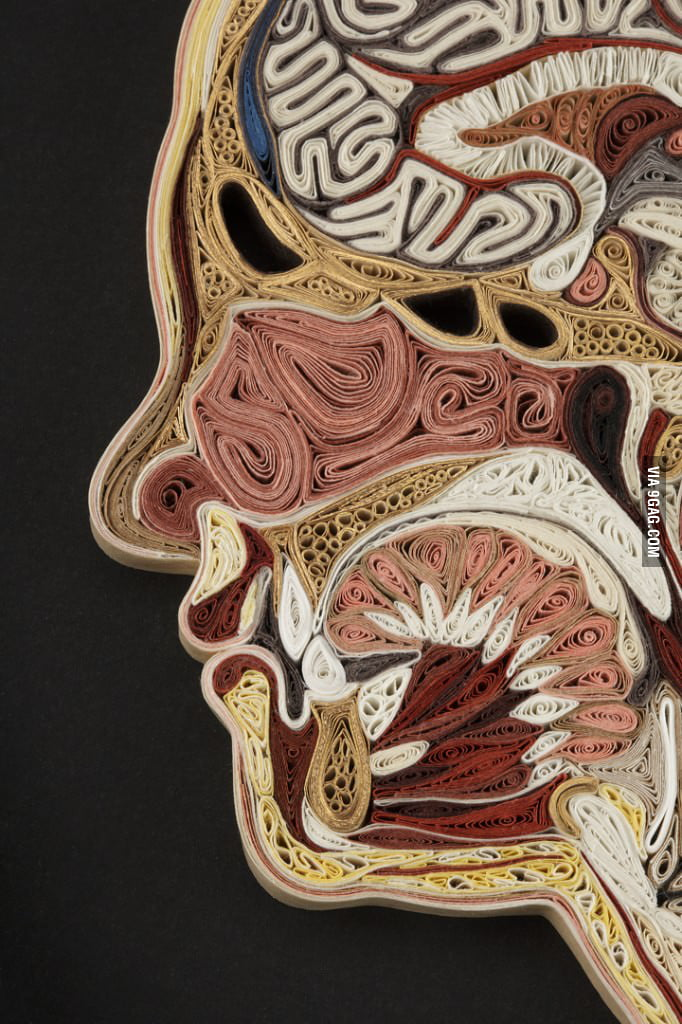 Anatomical Cross-Sections made with tissue paper
