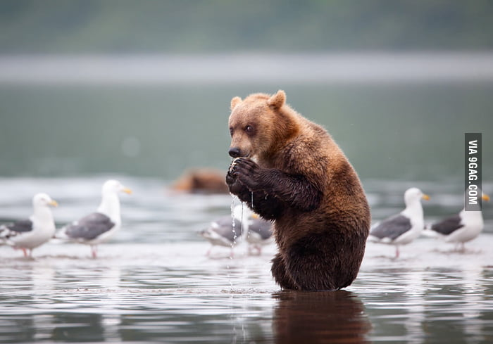 Looks like this bear is planning something evil