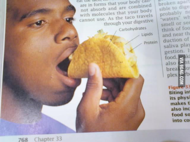 Hey Biology Example Guy, that is not how you eat a taco.