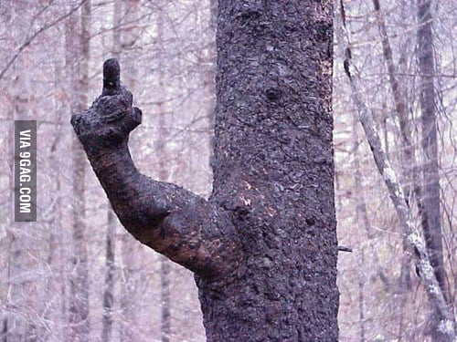 Well f*ck you too tree