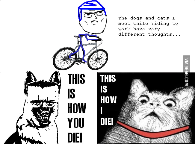 Dogs and cats think differently...
